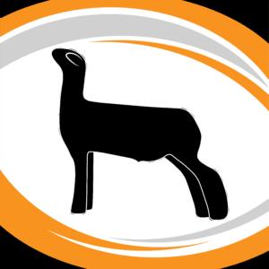 CFC Sheep